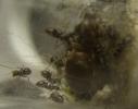 Blick ins Lasius-Emarginatus Nest_1