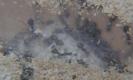 Blick ins Lasius-Niger Nest_8