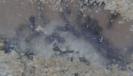 Blick ins Lasius-Niger Nest_9