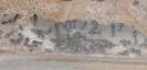 Blick ins Lasius-Niger Nest in einer Ameisenfarm_5