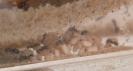 Blick ins Lasius-Niger Nest in einer Ameisenfarm_6