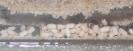 Blick ins Lasius-Niger Nest in einer Ameisenfarm_7